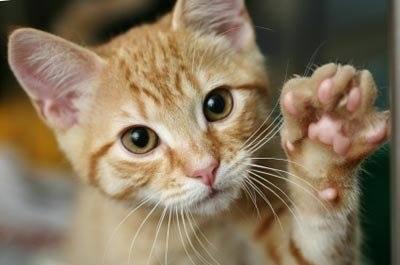 Campaña de esterilización de gatos callejeros, 2016
