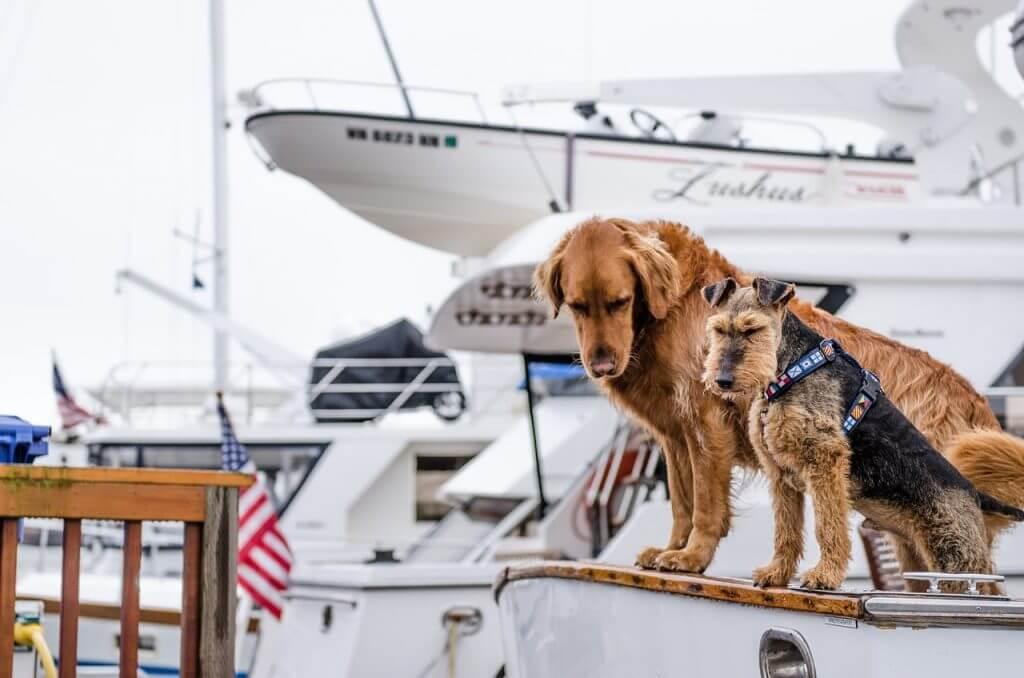 Consejos para navegar con mascotas - Baitara Veterinaria